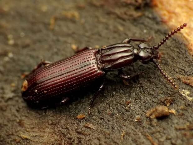 Нашествие жуков-вредителей в Колорадо