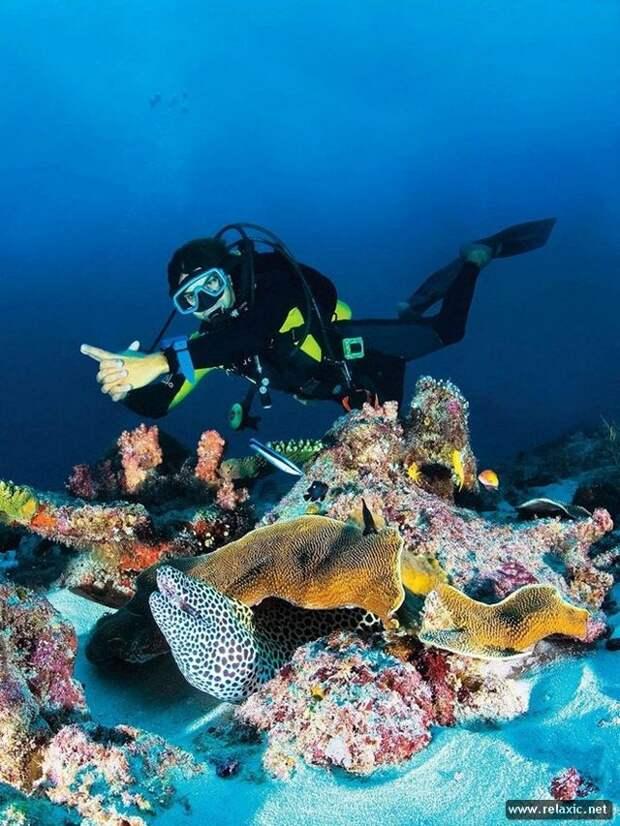 underwater_024