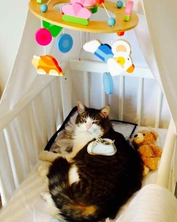 19. Потому что в итоге в доме должен остаться только один босс... и это не вы Кошка в доме, домашние животные, забавные фото с котами., кошка, кошки, фото кошек, хозяева животные, юмор