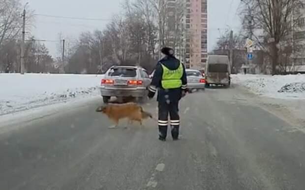 История о том, как гаишник собаку через дорогу переводил