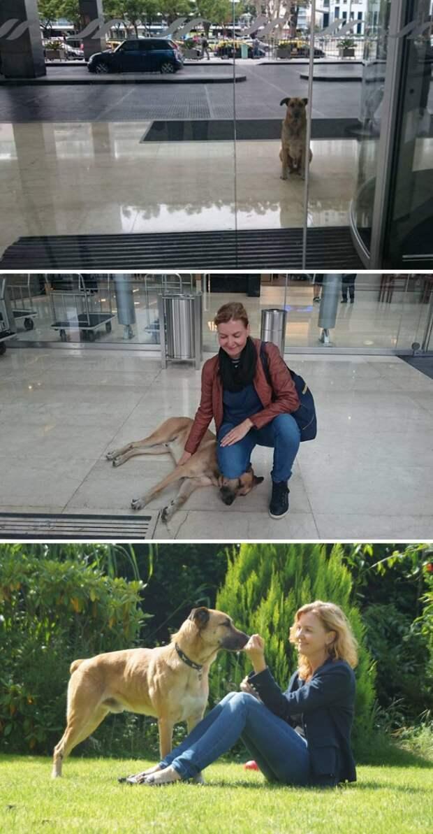 Стюардесса взяла к себе в дом собаку, терпеливо ждавшую ее у дверей отеля Счастливый конец, животные, спасение