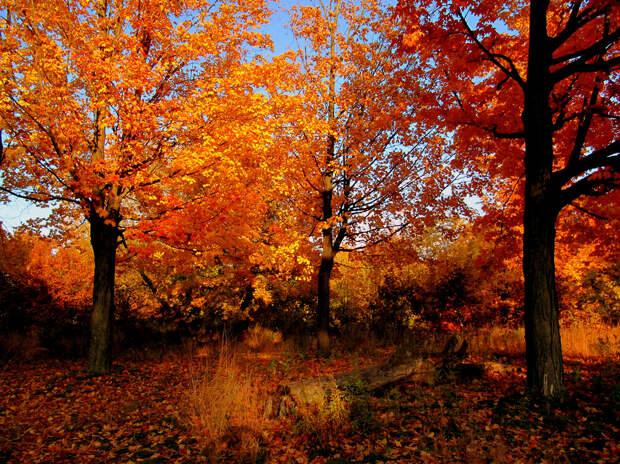 Осень. (Reto Fetz)
