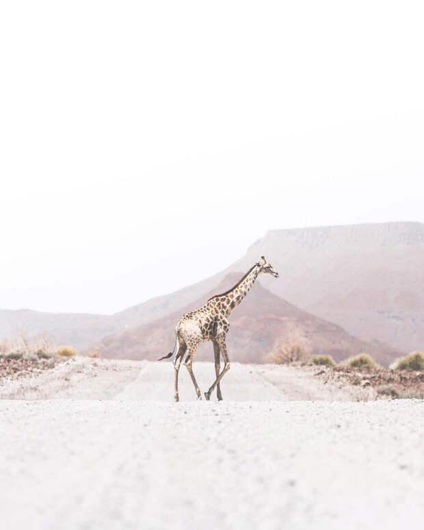 Когда дикая природа вызывает восторг. Фотограф Донал Бойд 18