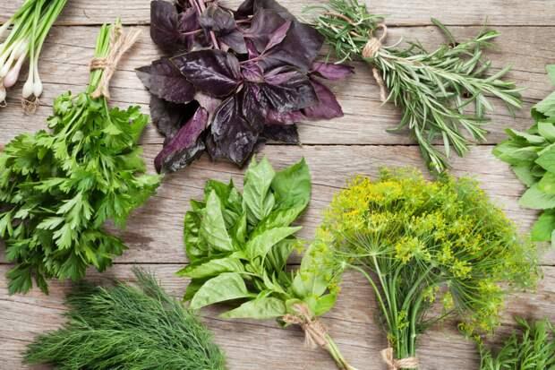 Польза кулинарных трав