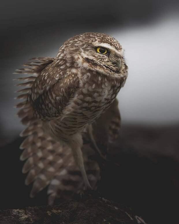 Магические фото сов, доказывающие, что это потусторонние создания