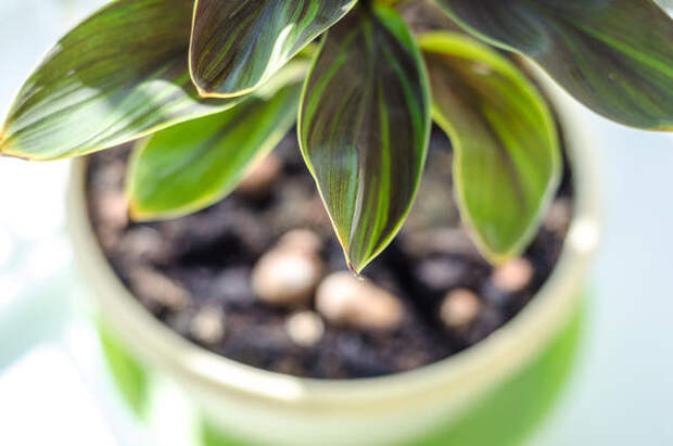 О проблемах растения поведают листья