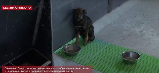Севастопольский приют стал концлагерем для животных