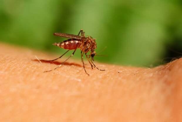 Уксус против комаров