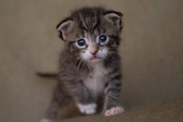 Храбрый котёнок отбился от семи бродячих собак