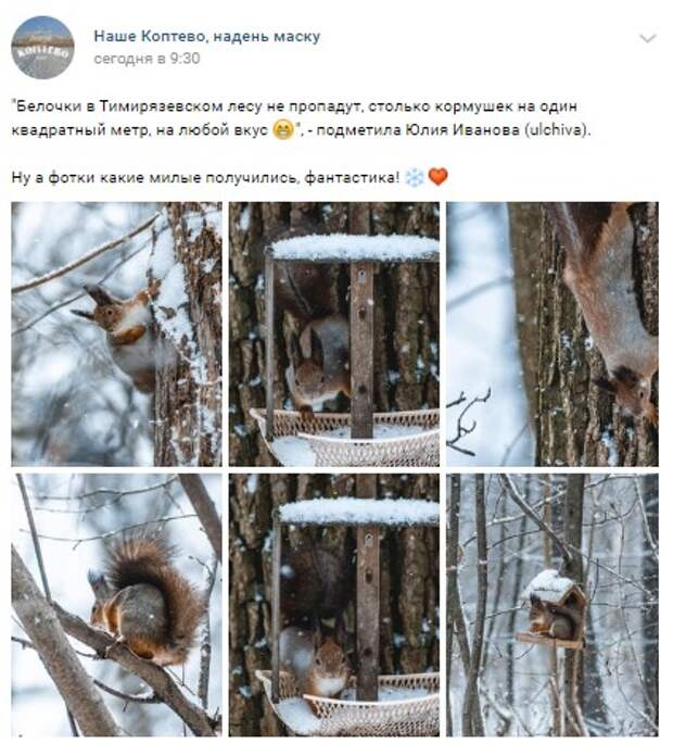 Фото дня: кормушки на любой вкус в Тимирязевском лесу