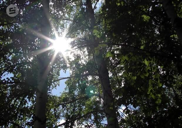 Тепло и без осадков будет в Удмуртии в пятницу