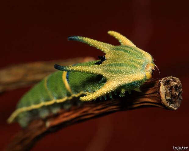 caterpillar-moth-butterfly-before-after-metamorphosis-18-1