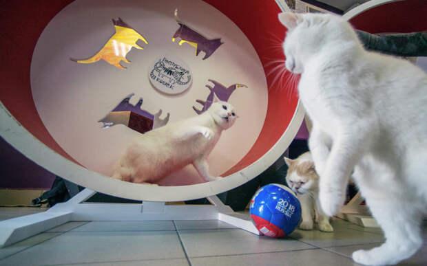 Коты из Эрмитажа стали наследниками гражданина Франции