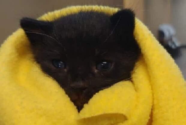 Малютка-котенок, выброшенный, будто мусор, получил право на счастье