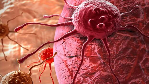 Ученые разгадали, как клетки регулируют свою способность передвигаться