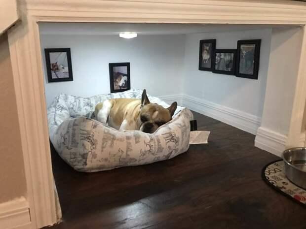 Своя собственная комната под лестницей животные, жизнь, мир, роскошь, собака, удобство, фото
