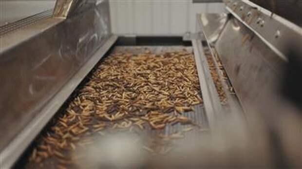 Белок, полученный при переработке насекомых