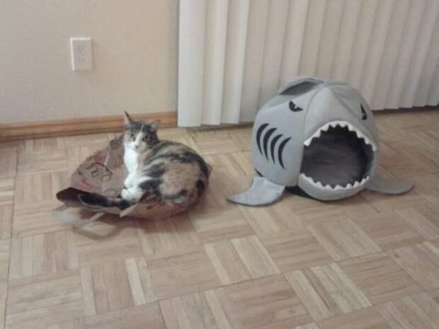 17. Самая прекрасная кошачья кровать на свете? Ну вот еще, какие глупости! Кошка в доме, домашние животные, забавные фото с котами., кошка, кошки, фото кошек, хозяева животные, юмор
