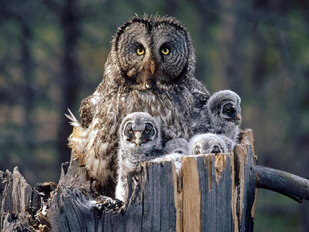 NewPix.ru - В мире животных. Фото. Часть 2