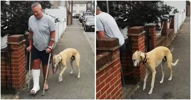 Мужчина потратил 400$ на исследования хромоты своей собаки, и обнаруживает, что она имитирует её