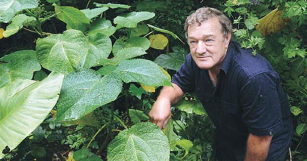 Жалящее дерево - наиболее ядовитое растение в мире