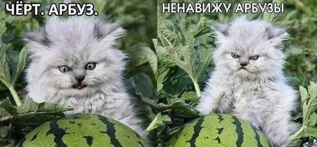Анекдоты в пятницу...в картинках