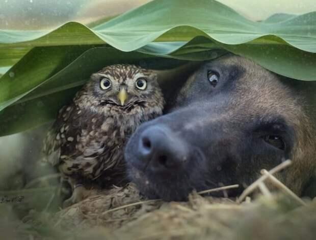 Сова и собака
