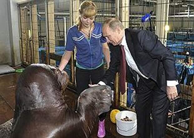 В сентябре 2013 года в Приморском аквариуме Владимир Путин пожал лапу моржу