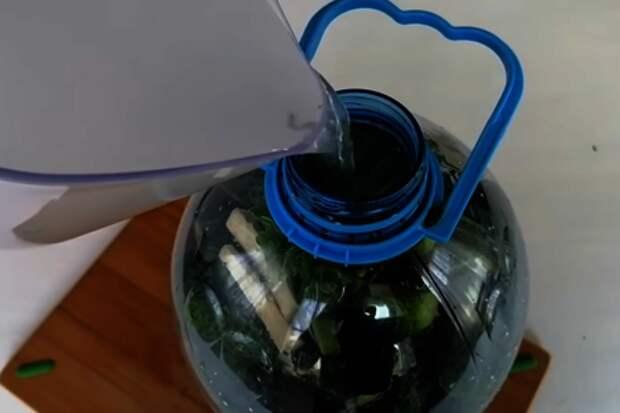 Быстрый способ засолки огурцов на зиму / огурцы в бутылке: фото шаг 4