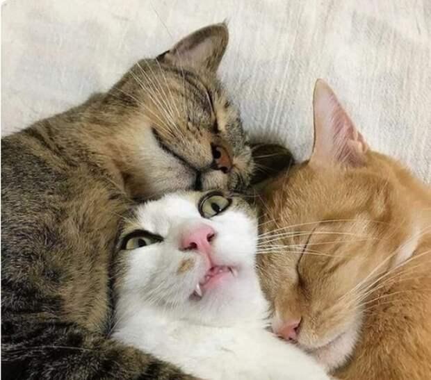 Как показать безысходность в удушающих оковах любви гифки, коты, фото