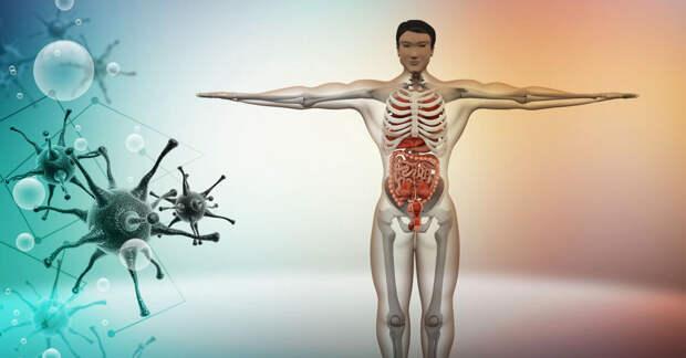 Токсичные эстрогены: риски для здоровья и баланса гормонов женщин и мужчин