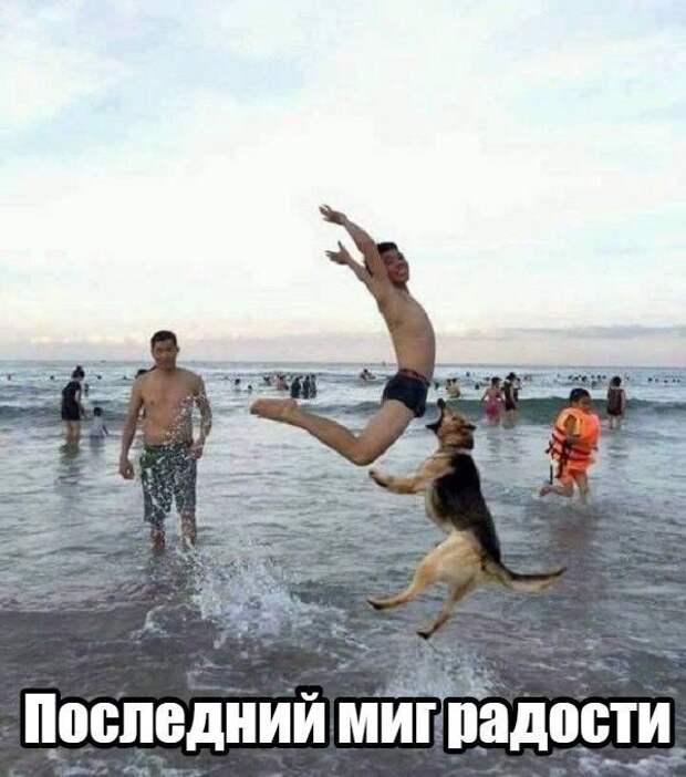 Прикол - bigmir)net
