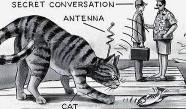 Кошка-шпион и взрыв Луны: тайные планы холодной войны