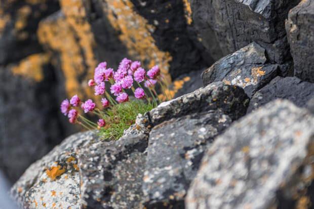 Сочетание монументальных камней и хрупких растений завораживает