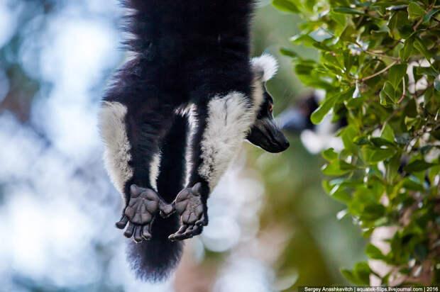 То, зачем тысячи туристов едут на Мадагаскар