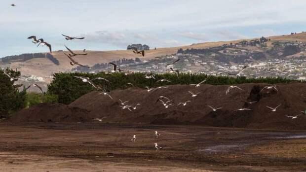 Ужасающий запах гнилой рыбы, мочи и экскрементов из загадочного источника измучил жителей новозеландского города
