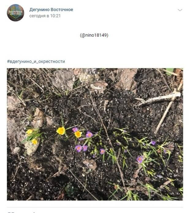 Фото дня: первоцветы на Дубнинской