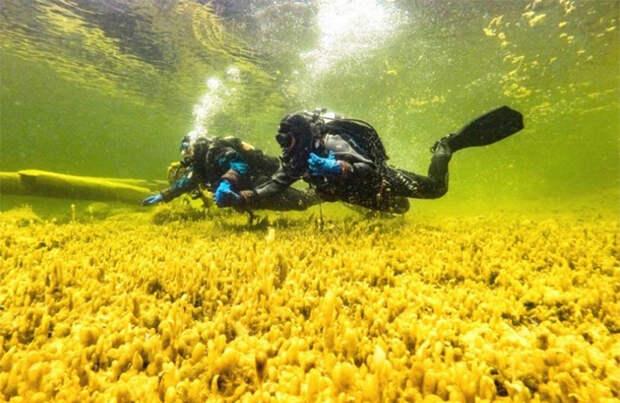 Холодный дайвинг: на Алтае открылась подводная экотропа