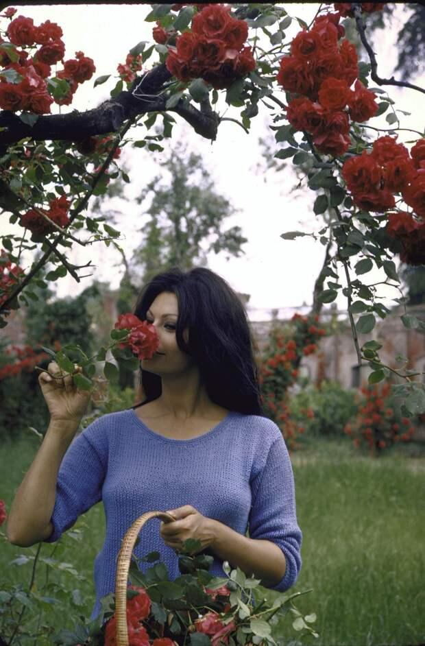 В гостях у Софи Лорен. Подборка фотографий легендарной актрисы на ее вилле. 1964 год.