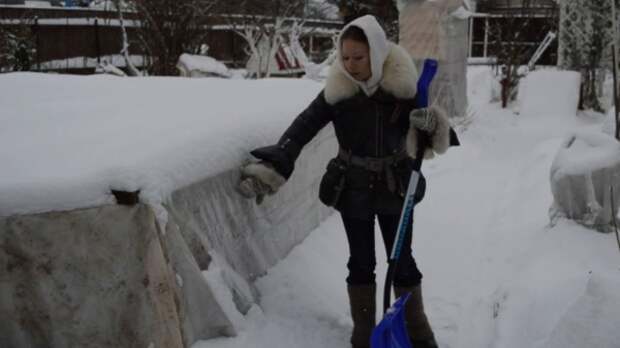 О важных мероприятиях зимой в саду