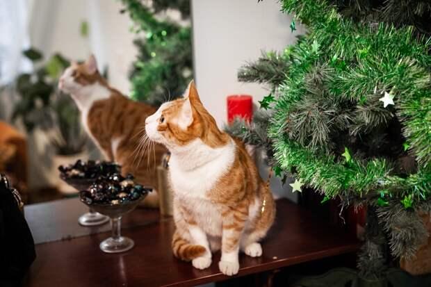 Этот котик был домашним, только вот хозяева его предали...