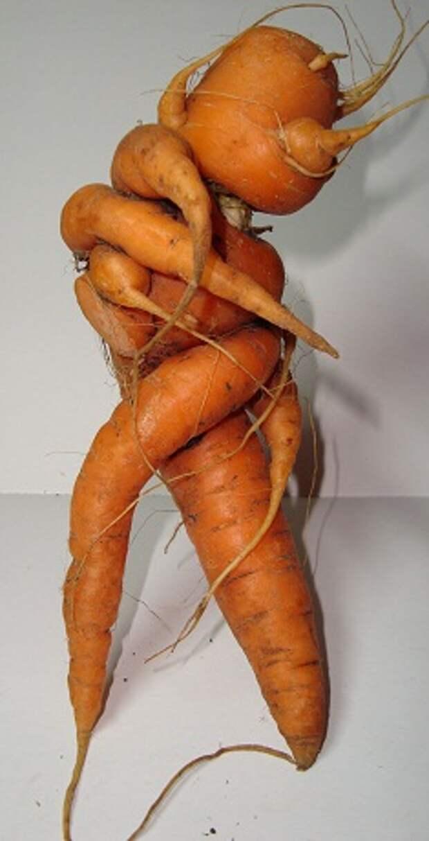 Смешная морковка