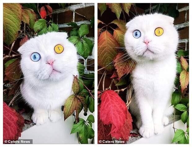 ВПетербурге белоснежный кот сразноцветными глазами наконец нашел хозяина