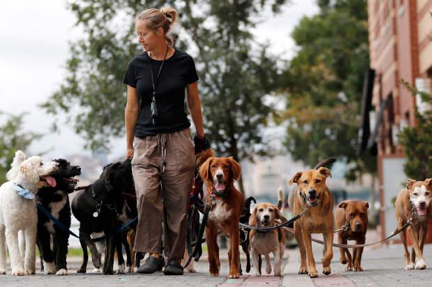 Главное не боятся собак. Фото: rg.ru.