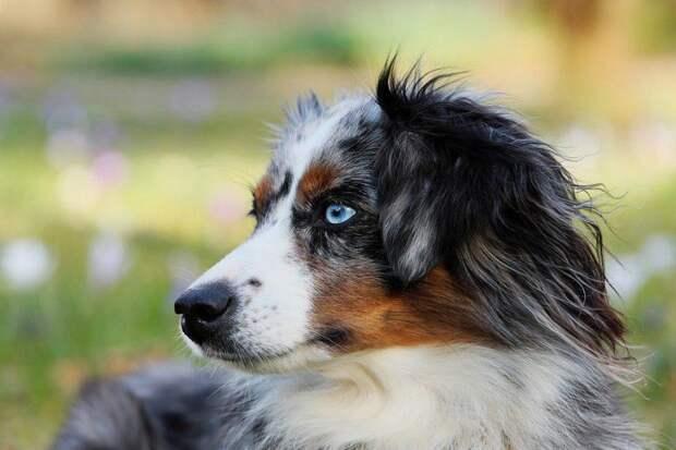 Собака. Фото: мос. ру