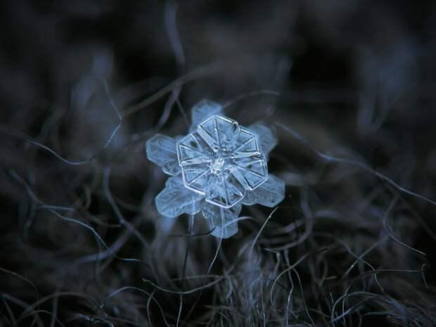 Фотограф из Москвы показал, как снежинки выглядят на самом деле