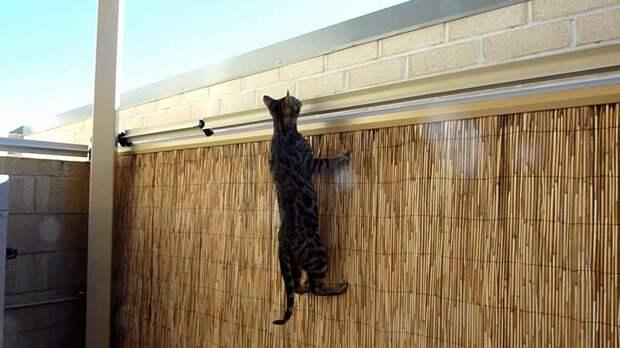 Устройство от побега кошек со двора