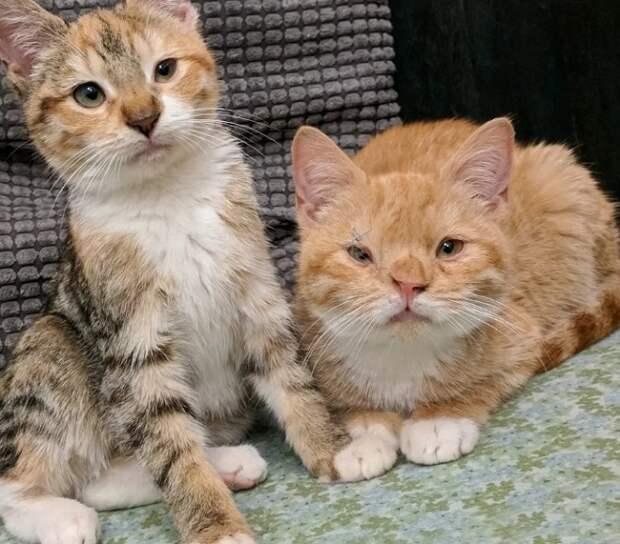 Необычные коты