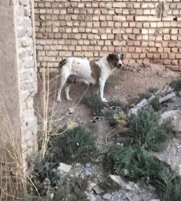 Лающая у дороги собака, просила спасти своего щенка, застрявшего с банкой на голове