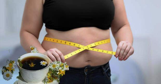 Растения, которые помогают контролировать вес